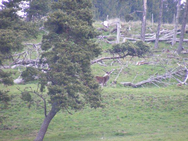 Le cézallier en Mai Dscf1111