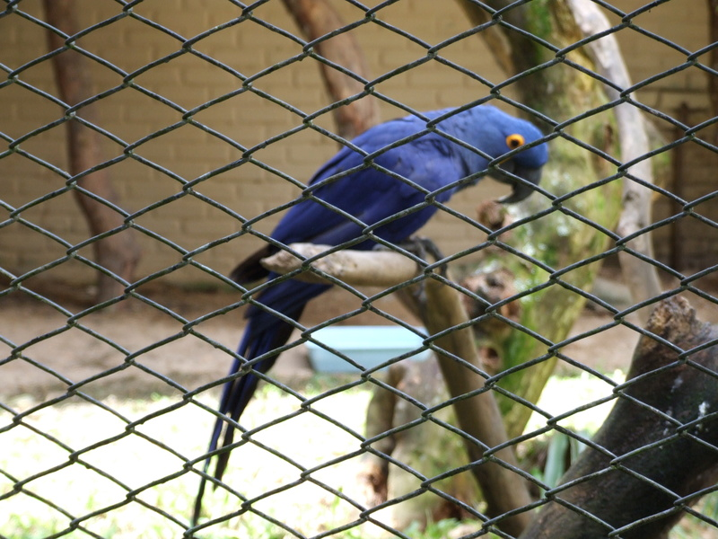 Le Parc aux Oiseaux de Villard les Dombes Dscf0222