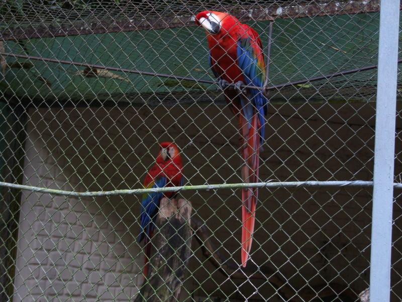 Le Parc aux Oiseaux de Villard les Dombes Dscf0223