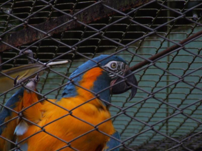 Le Parc aux Oiseaux de Villard les Dombes Dscf0224