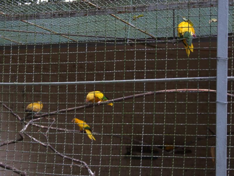 Le Parc aux Oiseaux de Villard les Dombes Dscf0225