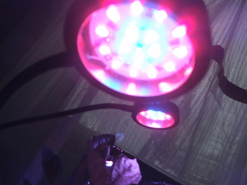lampes LED rouges et bleu pour les semis? Dscf2427