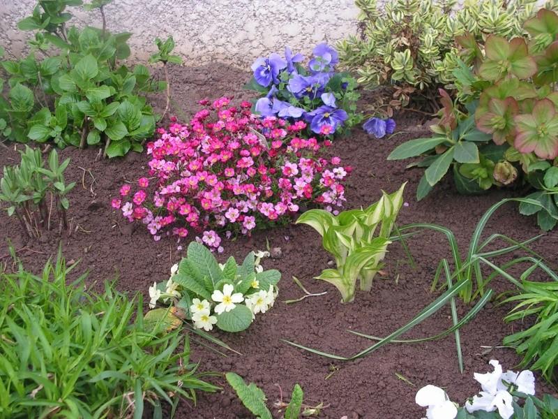 le petit jardin de stef ;o) Foto_b22