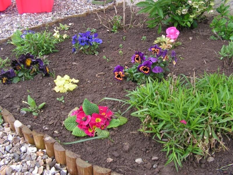 le petit jardin de stef ;o) Foto_b23