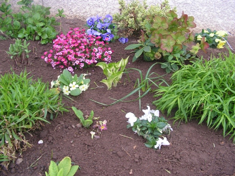 le petit jardin de stef ;o) Foto_b24