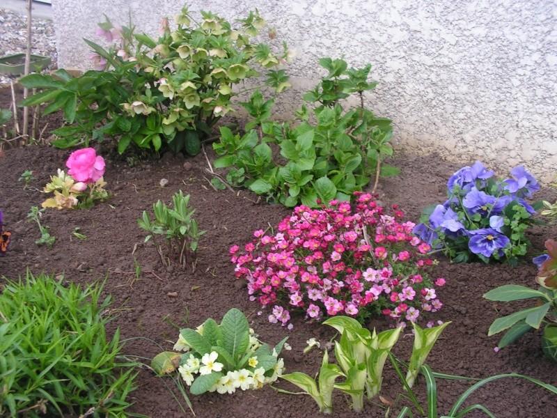 le petit jardin de stef ;o) Foto_b28