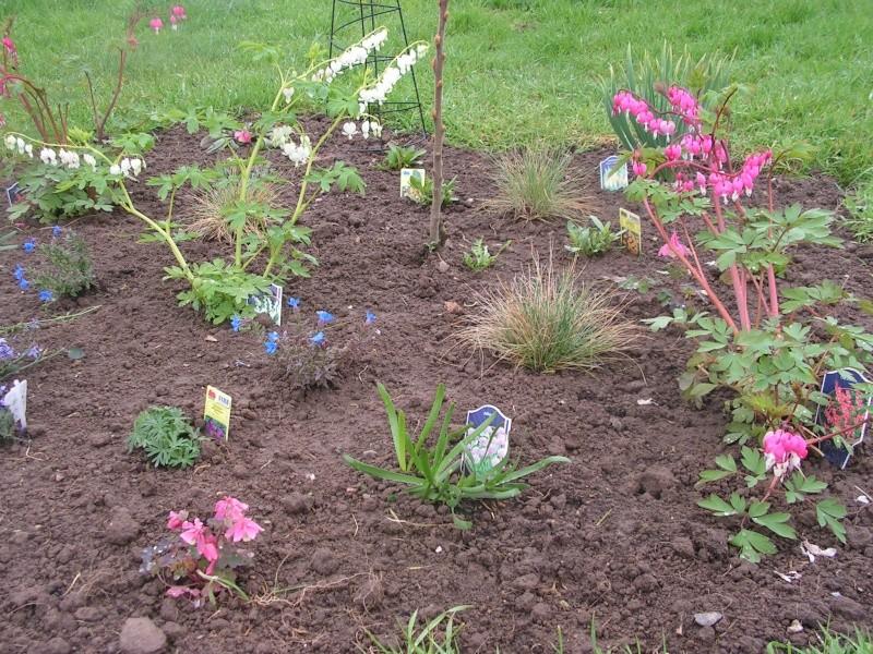 le petit jardin de stef ;o) Foto_b32