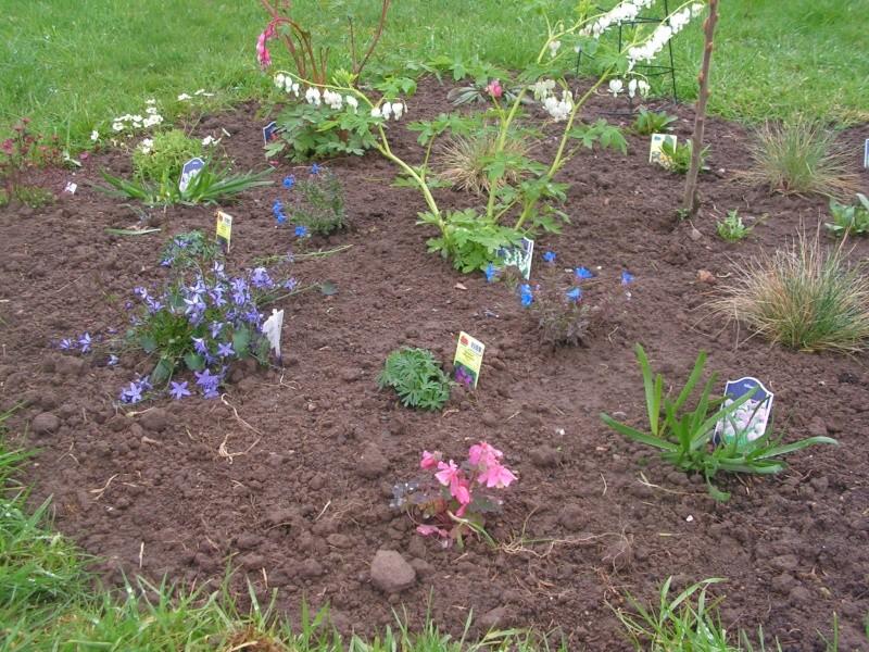 le petit jardin de stef ;o) Foto_b33