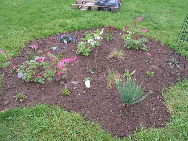 le petit jardin de stef ;o) Foto_b34