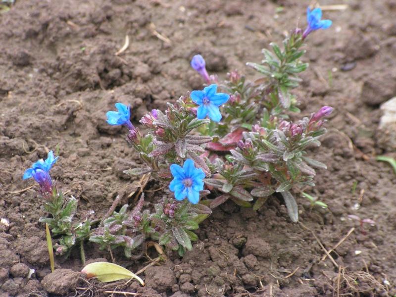 le petit jardin de stef ;o) Foto_b35