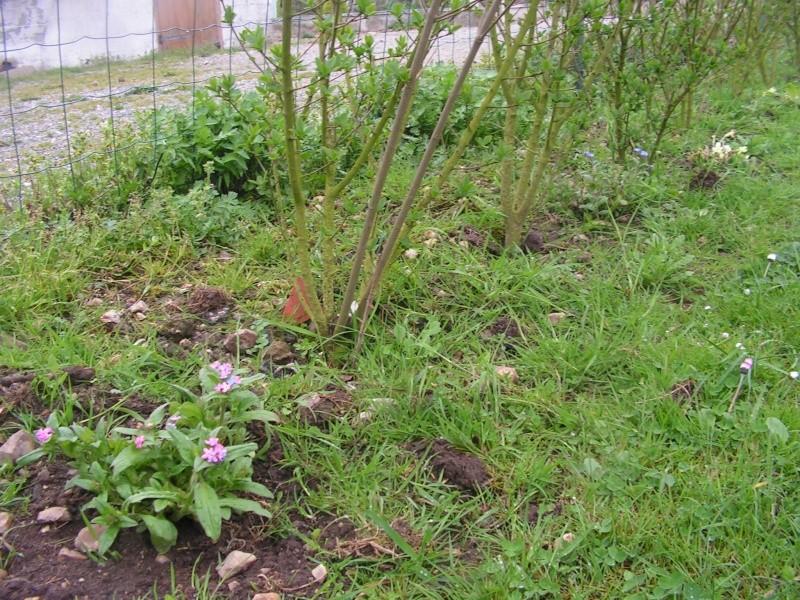 le petit jardin de stef ;o) Foto_b36