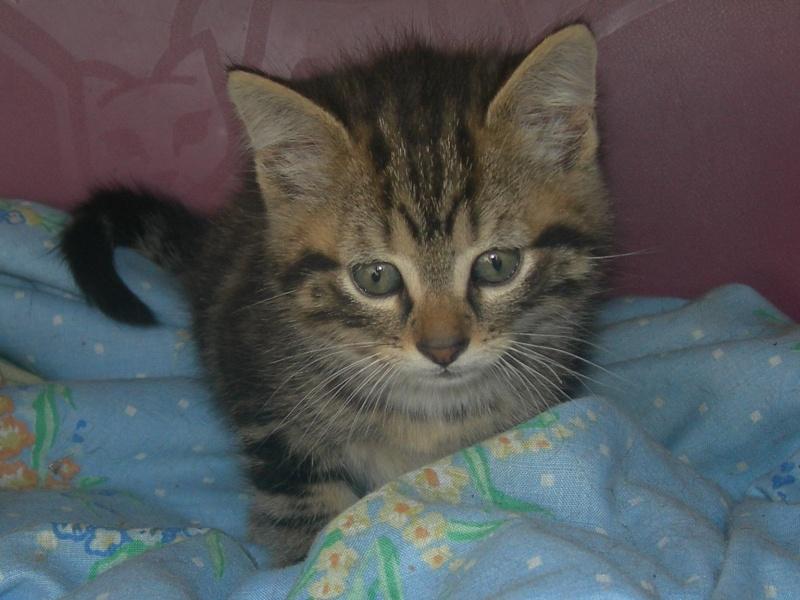 Eliott, un de mes chatons en FA, positif à la leucose... Dscn2518