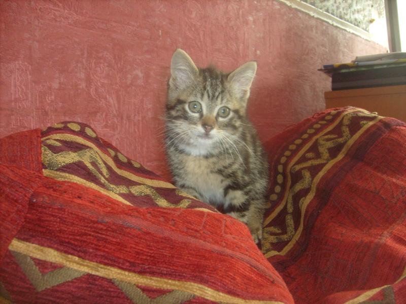 Eliott, un de mes chatons en FA, positif à la leucose... S7300010
