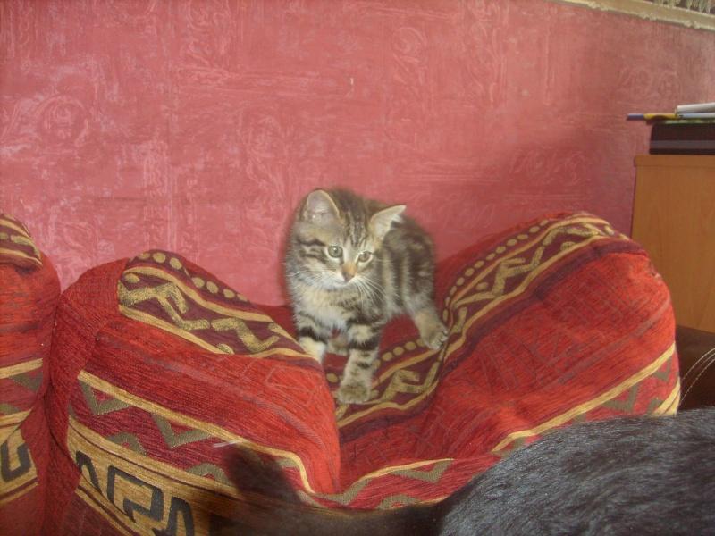 Eliott, un de mes chatons en FA, positif à la leucose... S7300011