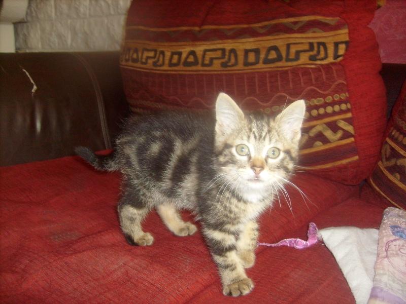 Eliott, un de mes chatons en FA, positif à la leucose... S7300012