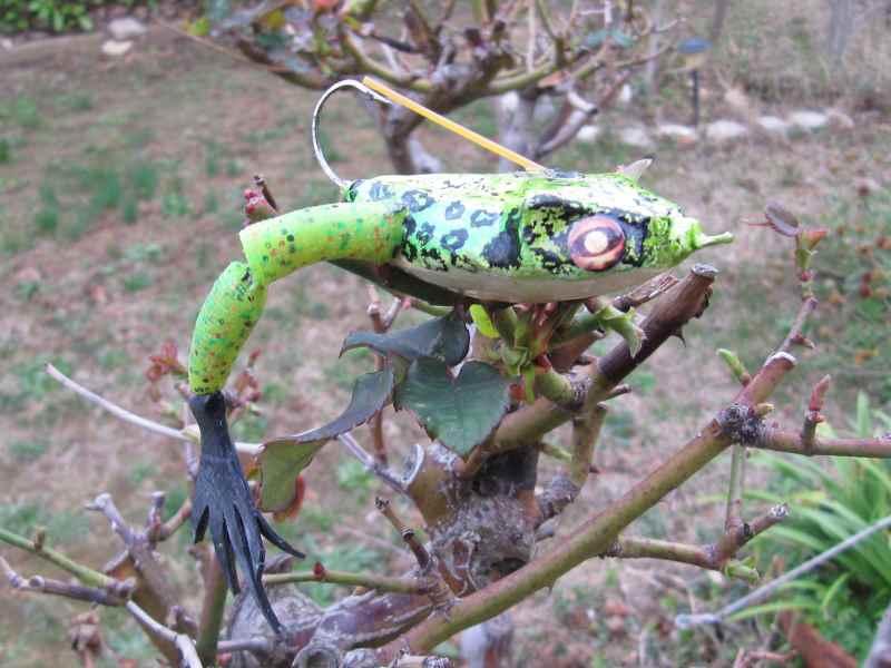 Quelques grenouilles Img_1118