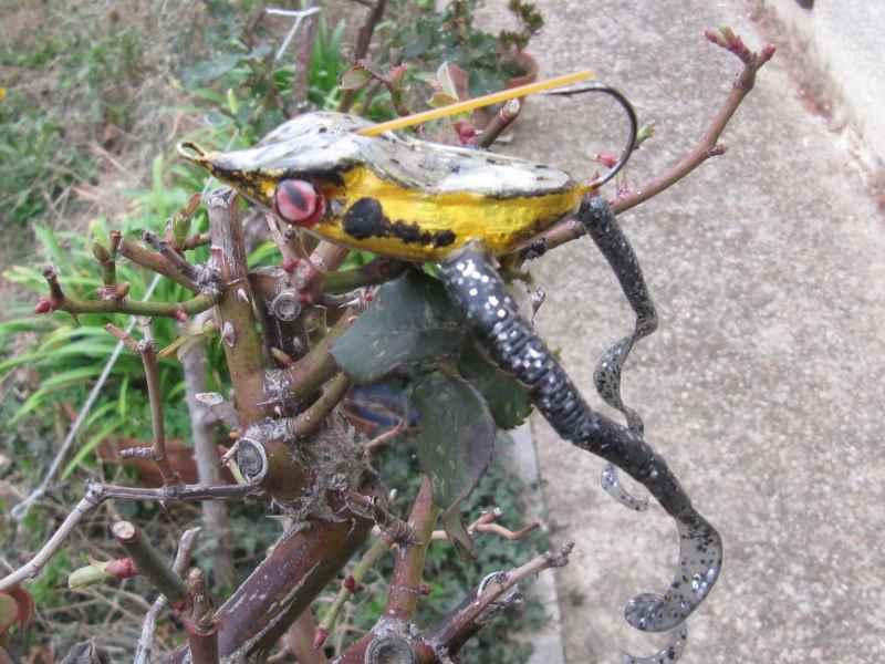 Quelques grenouilles Img_1120