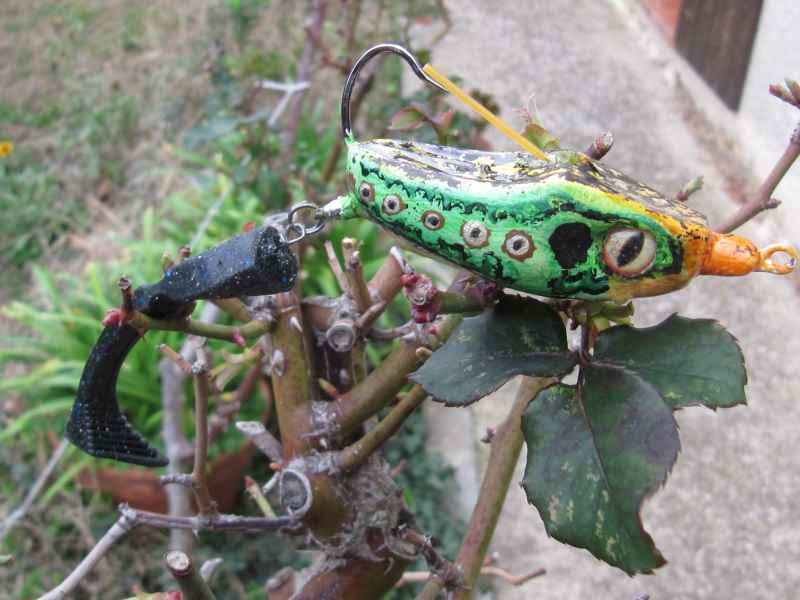 Quelques grenouilles Img_1122