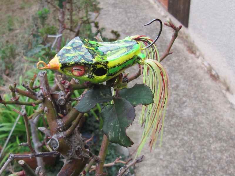 Quelques grenouilles Img_1124