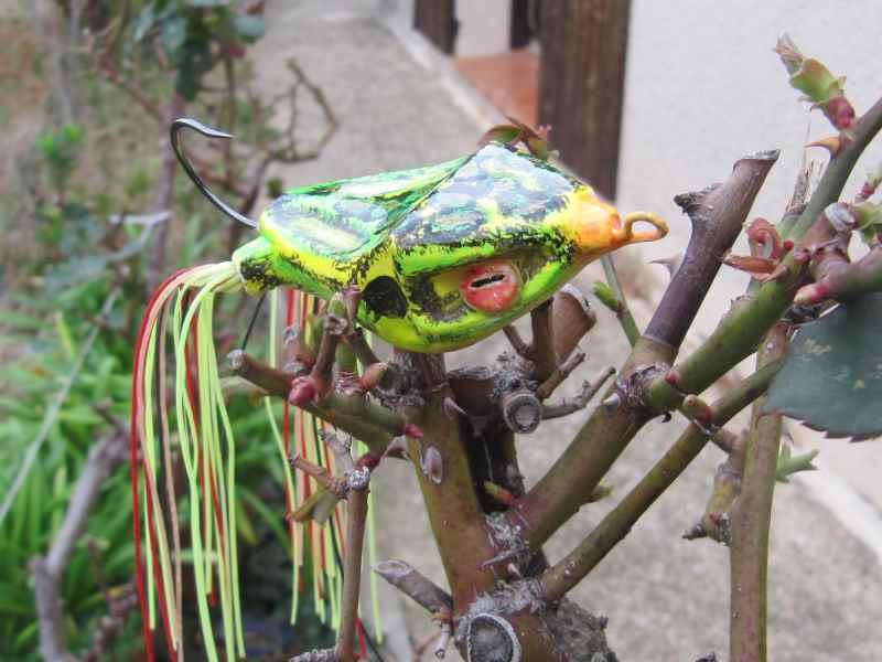 Quelques grenouilles Img_1125