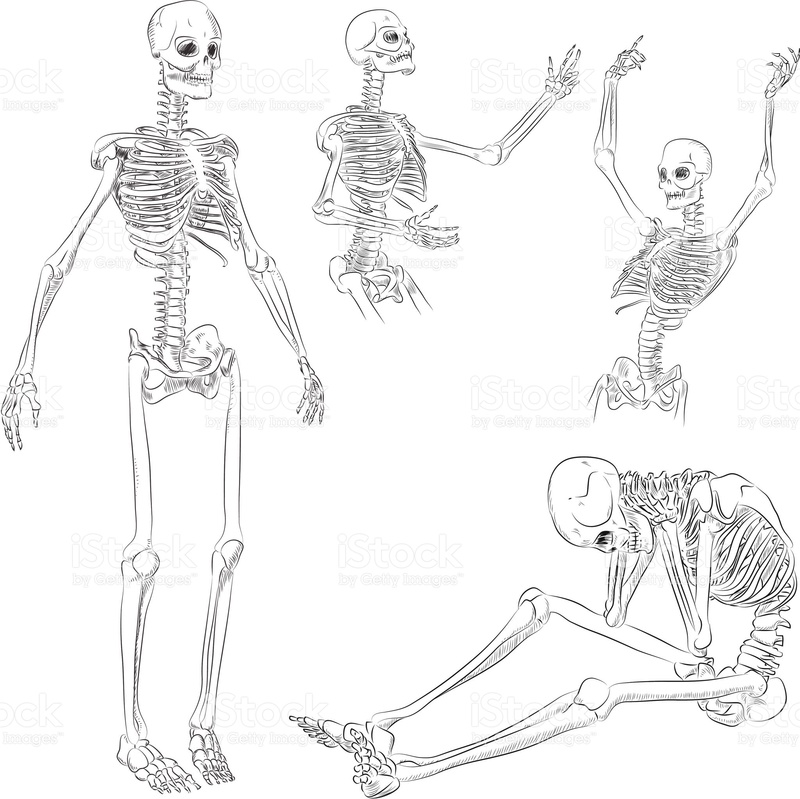 Le squelette humain 15839010