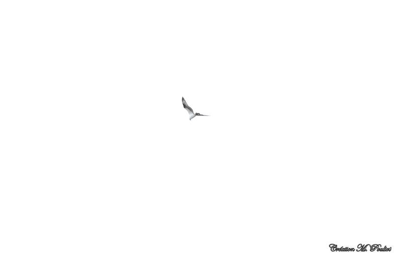 Rapace vue base Plein air Ste-Foy  Img_8110