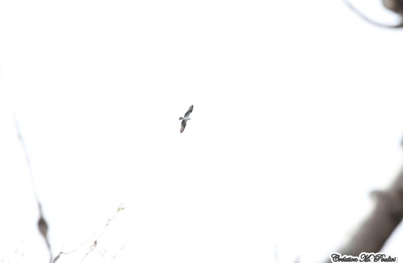Rapace vue base Plein air Ste-Foy  Img_8112