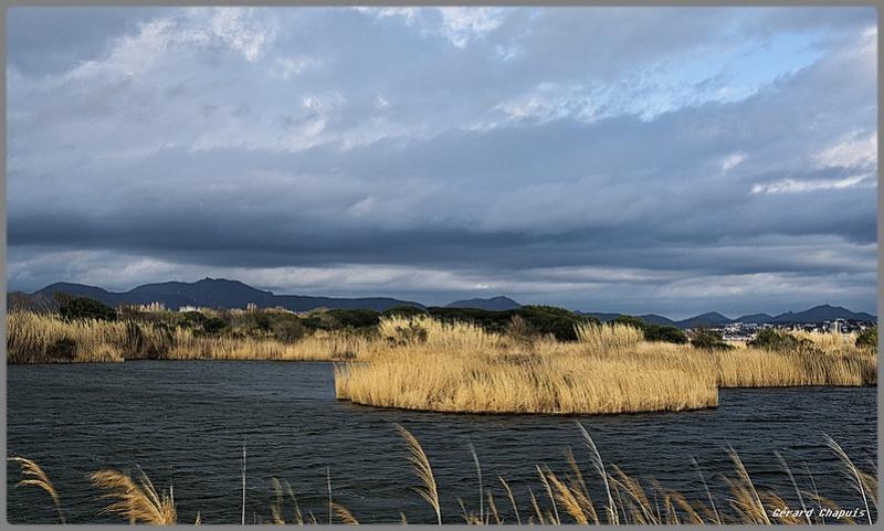 étangs de Villepey Imgp8933