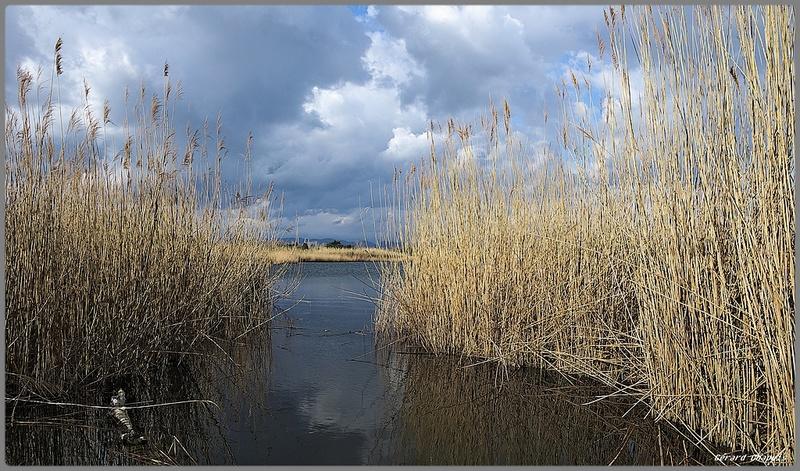 étangs de Villepey Imgp8934