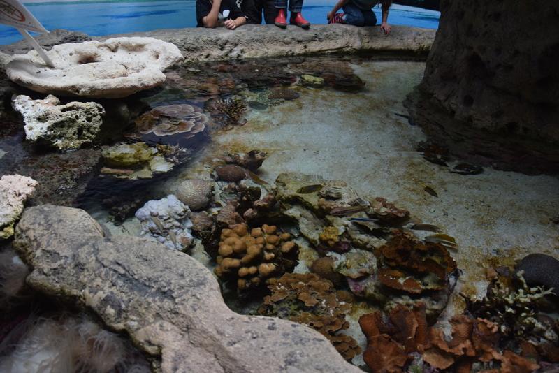 Aquaterrarium 900 L / Nouvelle Calédonie récifal/mangrove Dsc_0010
