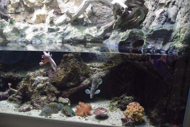 Aquaterrarium 900 L / Nouvelle Calédonie récifal/mangrove Dsc_0110