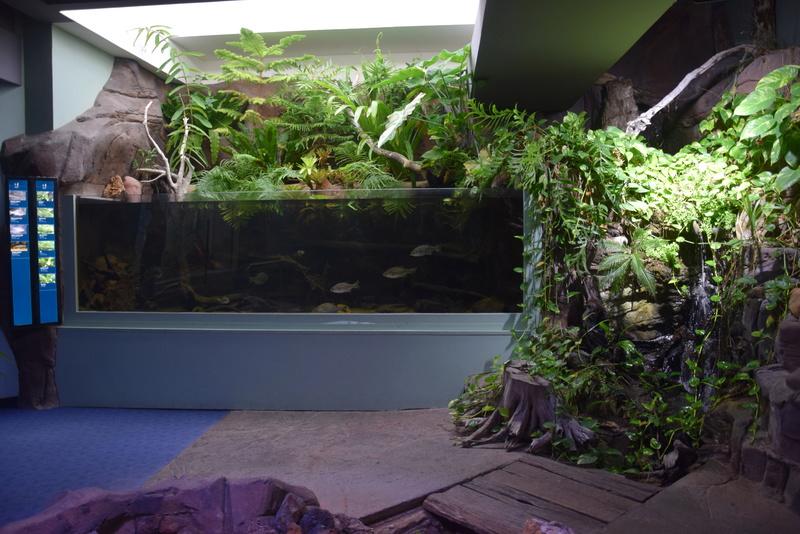 Aquaterrarium 900 L / Nouvelle Calédonie récifal/mangrove Dsc_0111