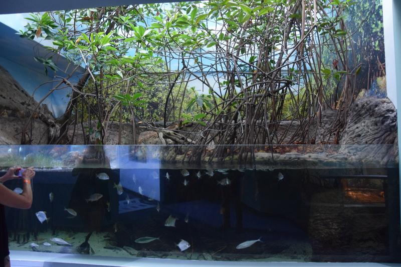 Aquaterrarium 900 L / Nouvelle Calédonie récifal/mangrove Dsc_0112