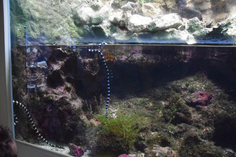 Aquaterrarium 900 L / Nouvelle Calédonie récifal/mangrove Dsc_0210