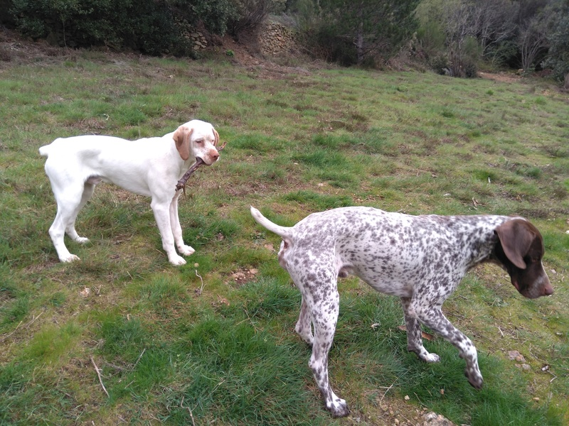 ... Mes compagnons de chasse Img_2020