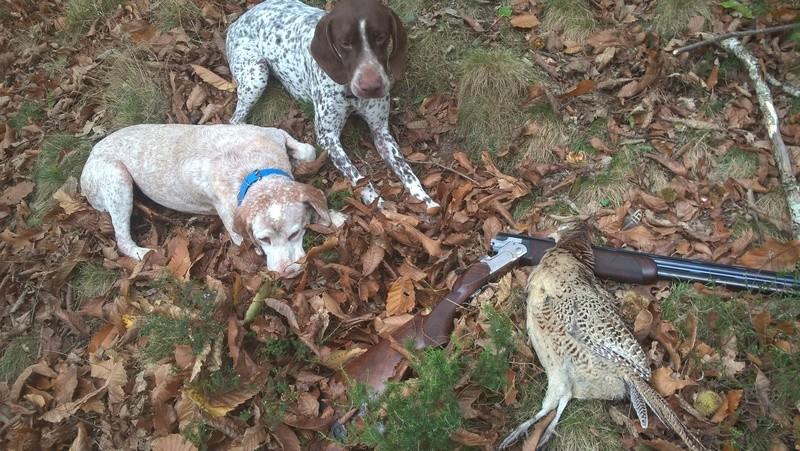 ... Mes compagnons de chasse Wp_20136