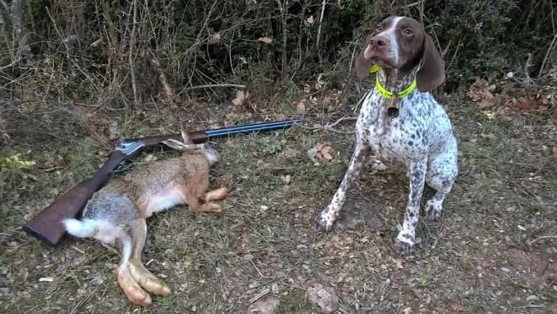 ... Mes compagnons de chasse Wp_20141