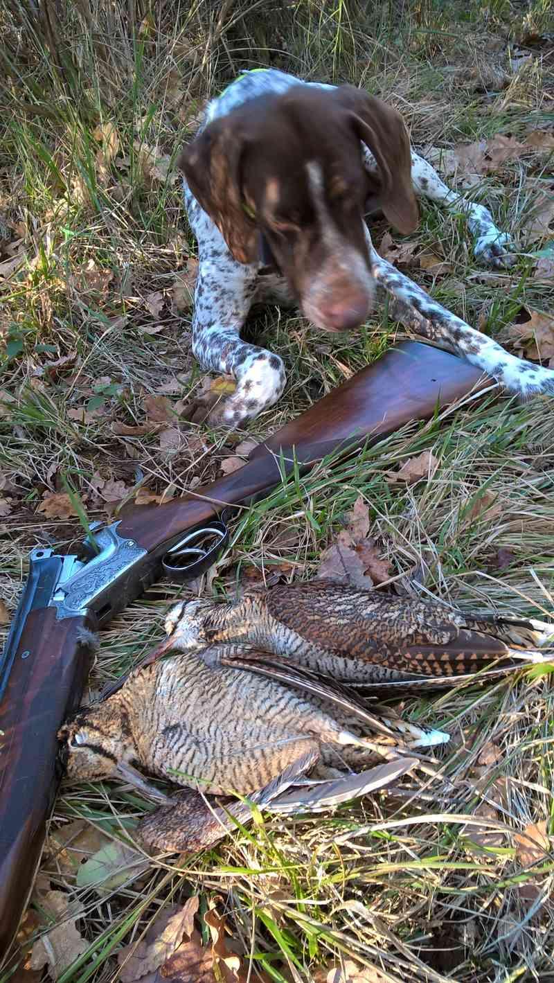 ... Mes compagnons de chasse Wp_20144