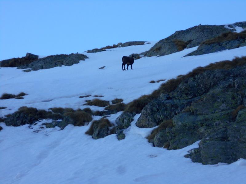 sommet sauvage en Gordo Cayre-12