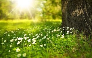 Madrigal brume heptasyllab Spring10
