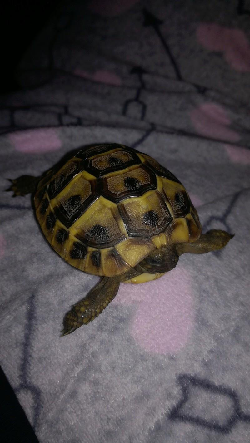 Espèce de tortue 15164810
