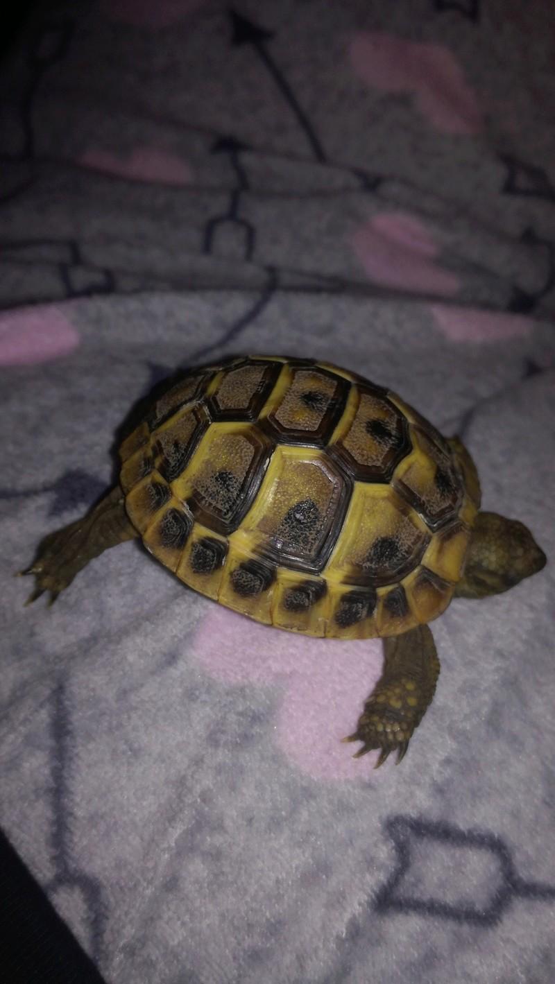 Espèce de tortue 15164811
