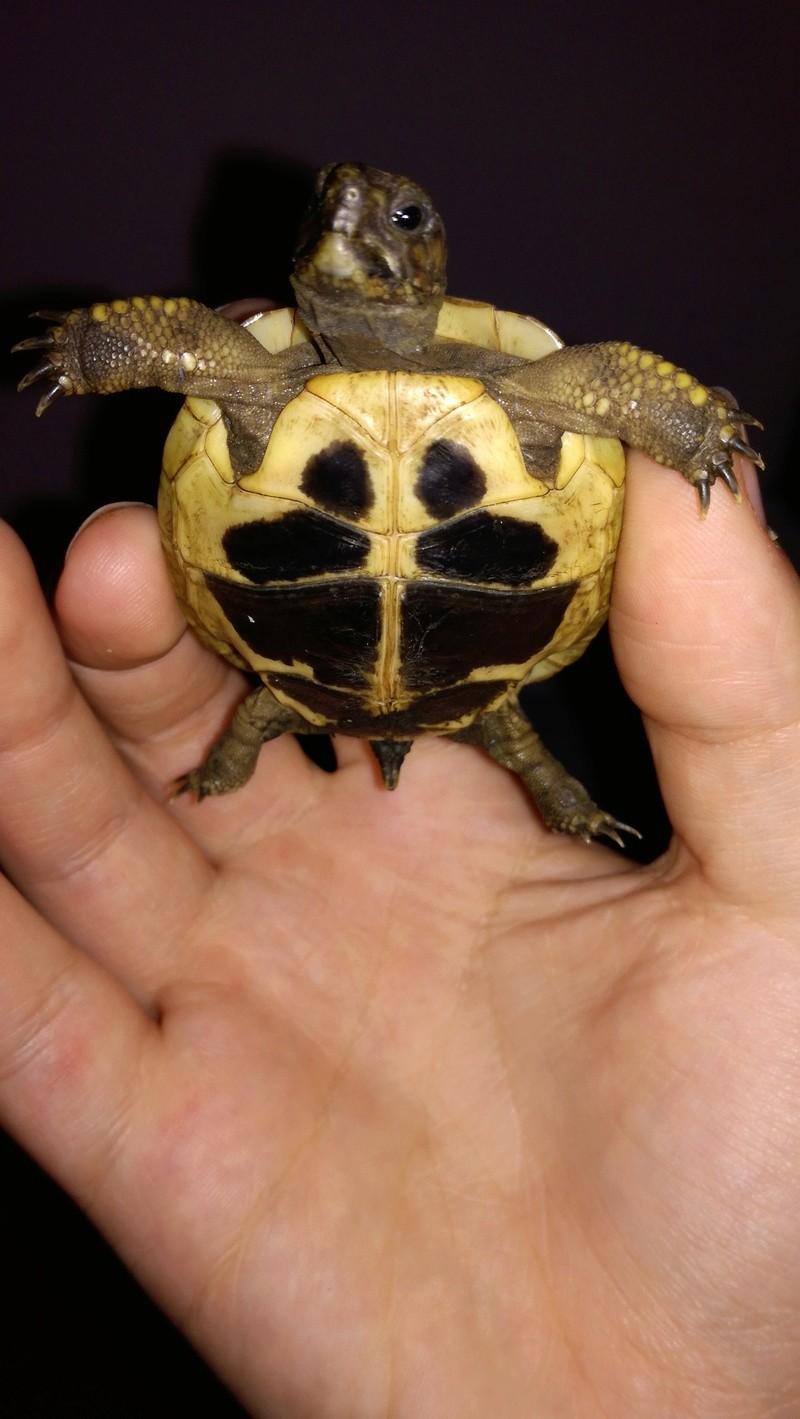 Espèce de tortue 15165310