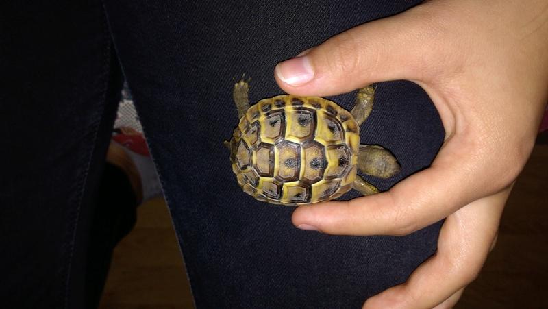 Espèce de tortue 15165311