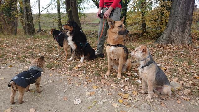 Balades canines: Pays de Gex/Jura/Genève ou Albertville (73) - Page 7 Dsc_1914