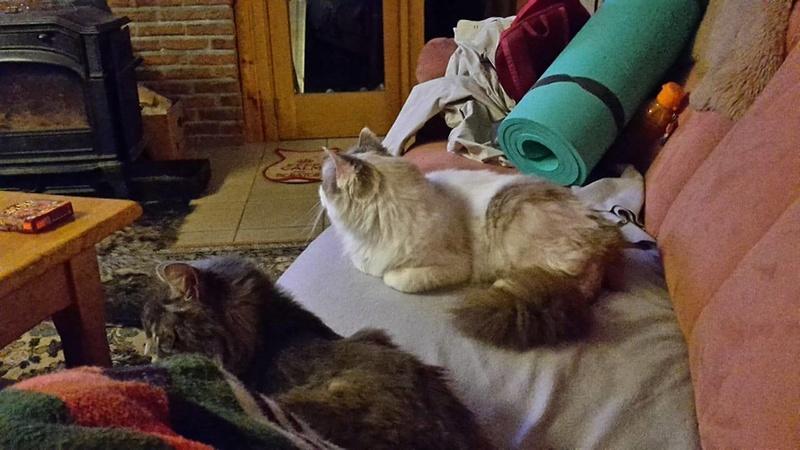 JULES et EDOUARD - chats mâles à poils longs, nés en 2005 - adoptés par Sophie et André (Belgique) - Page 2 22563510