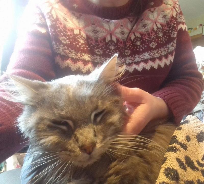 JULES et EDOUARD - chats mâles à poils longs, nés en 2005 - adoptés par Sophie et André (Belgique) - Page 2 26677710