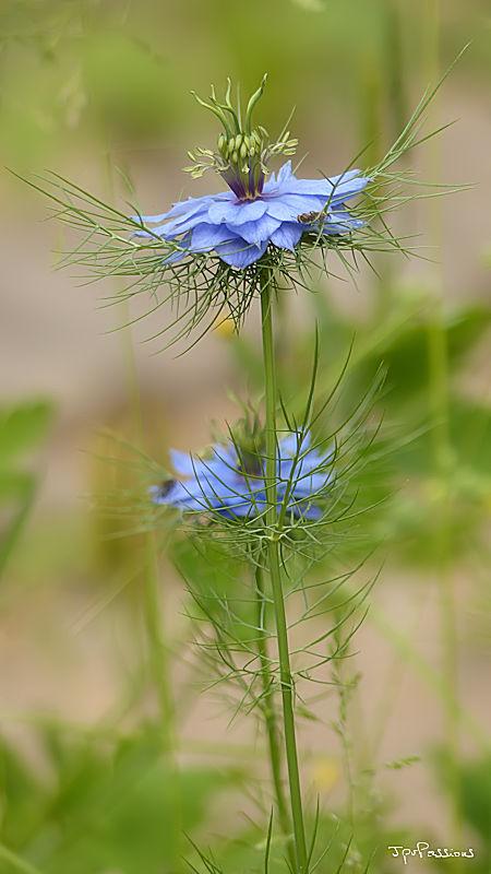 Quelques fleurs du jardin P1280519