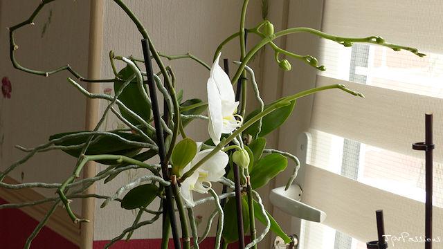 Keikis en fleurs P1320514