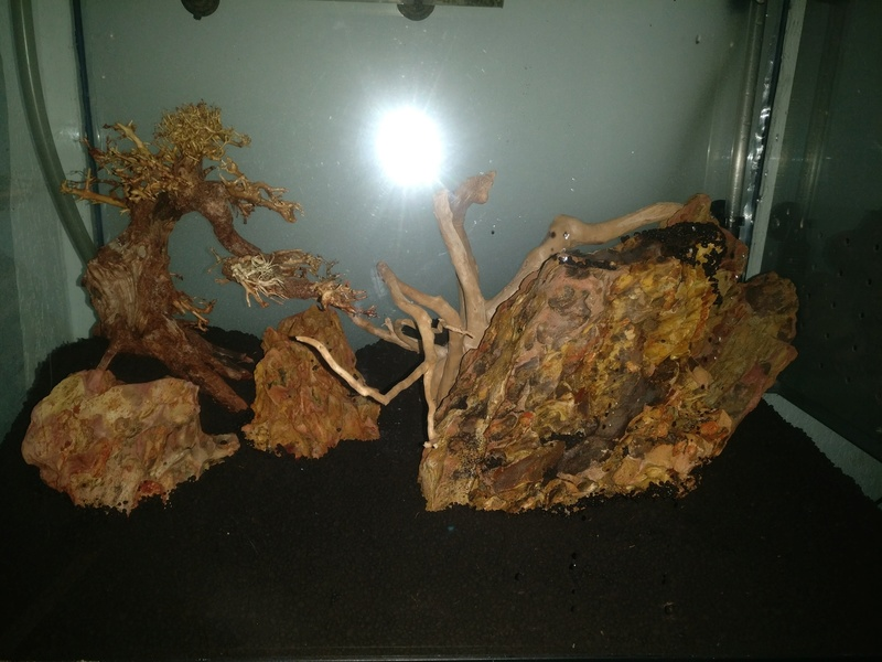 [Projet] Aquascaping Img_2047